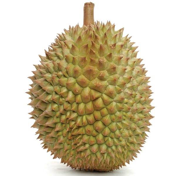 FRESH DURIAN FROM VIET NAM
